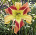 Thumbnail photo of 'Love and Dazzle' daylily.