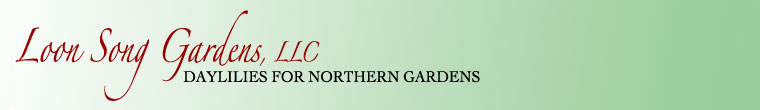 Banner for home page of Loon Song Gardens, LLC. Daylilies for northern gardens.